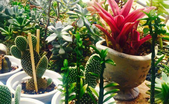 KLOA 観葉植物